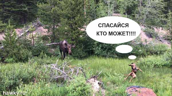 Юмор на охоте