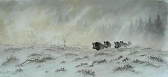 Охота на кабан
