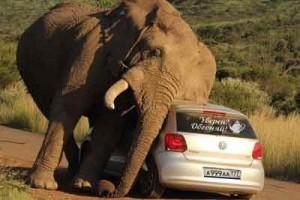 Охота на слона