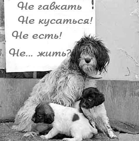 Закон и собаки
