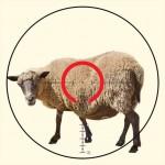 Охота на овечек