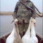 Охота на лебедя